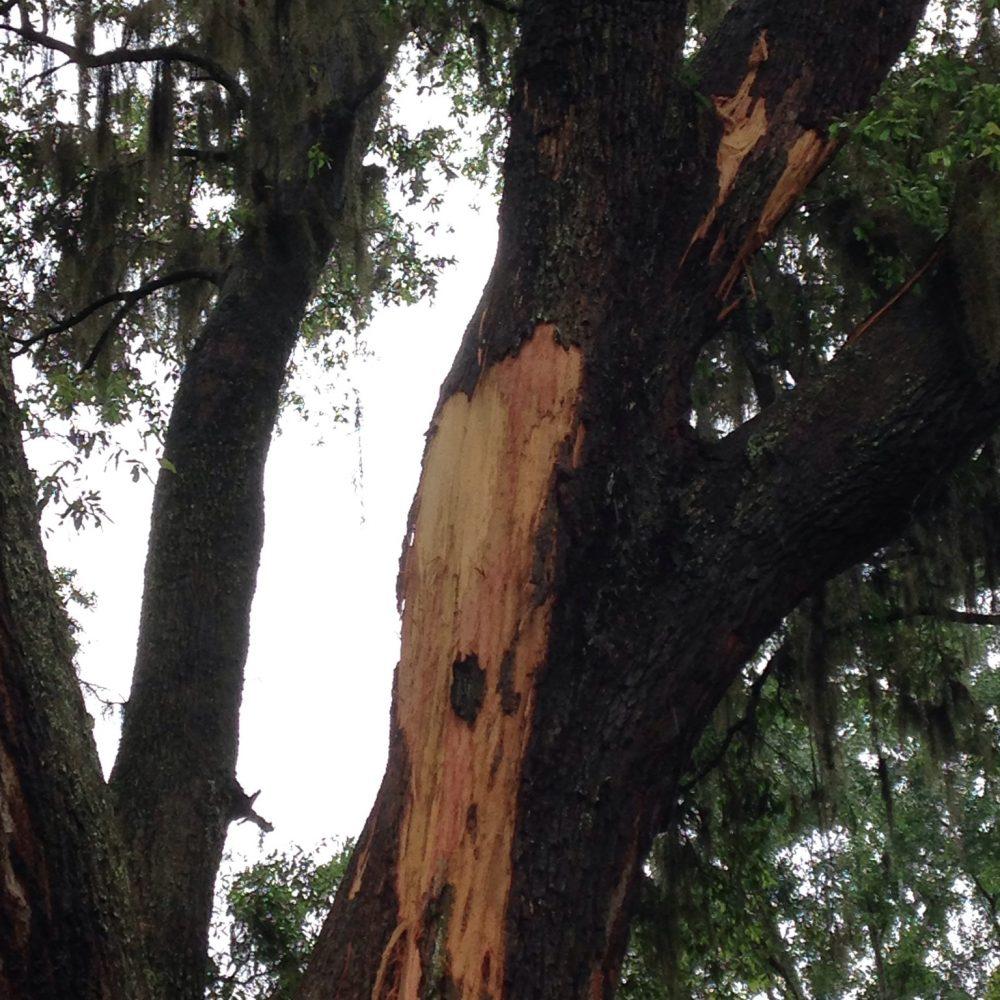 Lightning damage is covered